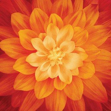 Fire Large Flower 43in x 43in