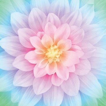 Opal Large Flower 43in x 43in