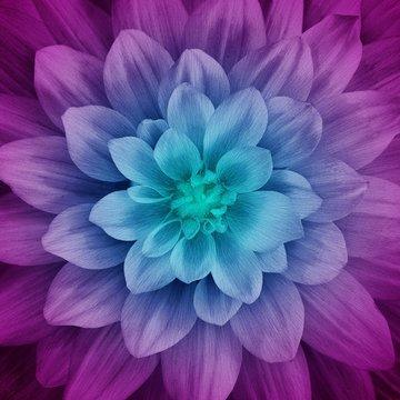 Aurora Large Flower 43in x 43in