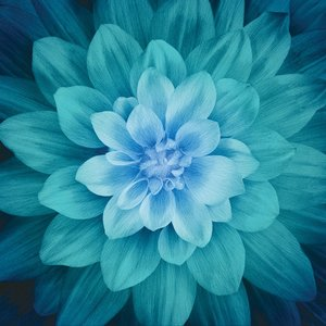 Teal Large Flower 43in x 43in